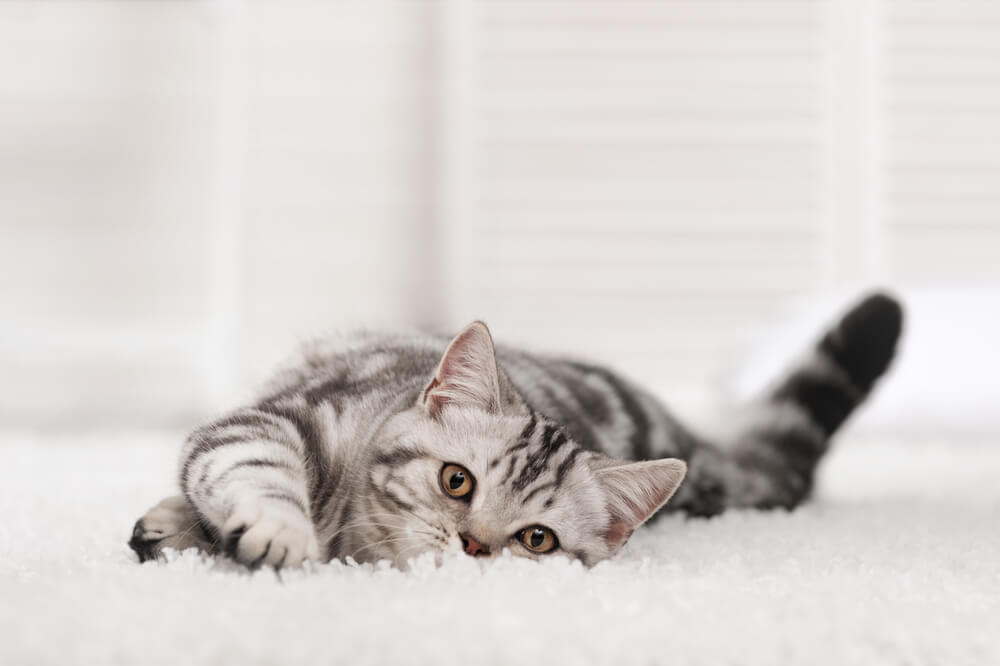 Four Things to Know About Buying Carpet with a Pet