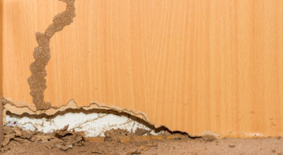 How Much Does It Cost to Exterminate Termites?