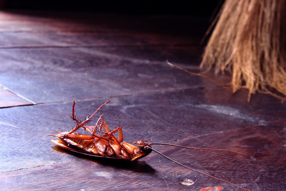 What Does Pest Control Do for Cockroaches